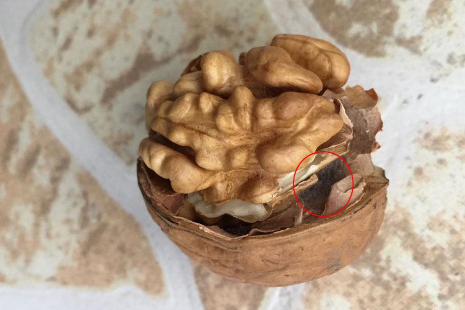 新疆185纸皮核桃起毛能吃吗?为什么会起毛?-第1张-讯沃blog(www.77nn.net)